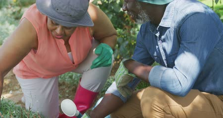 can : Front view close up of a senior African American couple in the garden, kneeling on the ground tending to plants, talking and smiling, slow motion