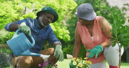 ajoelhado : Front view close up of a senior African American couple in the garden, kneeling on the ground tending to plants, talking and smiling, the man uisng a watering can, slow motion Vídeos