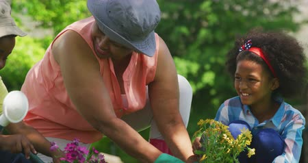 ajoelhado : Front view close up of a senior African American woman in the garden with her young grandson and granddaughter kneeling down and tending to plants and smiling, slow motion