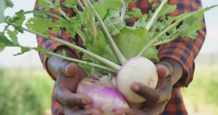 maréknyi : Front view mid section of an African American man in standing in a farm field carrying a handful of fresh organic vegetables, slow motion
