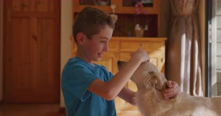 társ : Side view close up of a Caucasian boy wearing a blue t shirt at home in the living room, stroking the family dog, looking at it and smiling while it stands in front of him, slow motion 4k Stock mozgókép