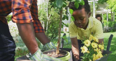 plantio : Front view of a happy African American couple and their young son in the garden, while the mother watches smiling, slow motion
