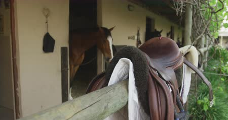 terbiye : Side view of chestnut and bay Dressage horses looking out of their stables in a stable block, and a saddle sitting on a fence in the foreground, slow motion Stok Video