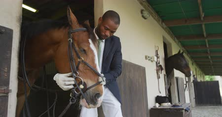 terbiye : Side view of a smartly dressed African American man putting the bridle on a chestnut horse at a stable before Dressage horse riding, slow motion