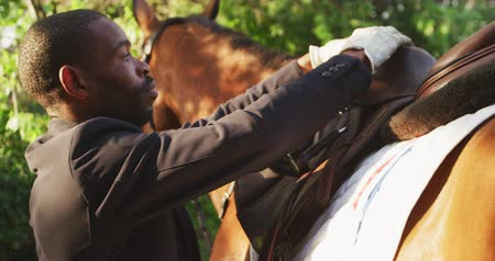 fegyelem : Side view close up of a smartly dressed African American man preparing the dressage saddle on a chestnut horse before horse riding, slow motion