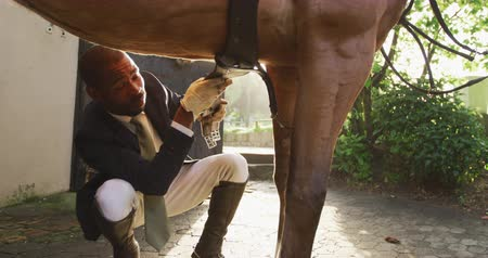terbiye : Front view close up of a smartly dressed African American man preparing the saddlery on a chestnut dressage horse, kneeling down and securing the girth before horse riding, backlit, slow motion