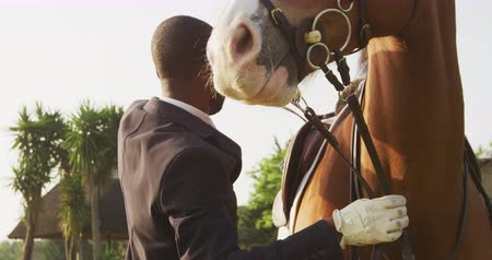 terbiye : Side view close up of a smartly dressed African American man preparing the saddle of his chestnut Dressage horse before horse riding, slow motion Stok Video