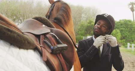 dizgin : Front view of a smartly dressed African American man standing beside a chestnut Dressage horse, fastening his riding hat, slow motion