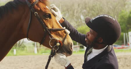 fegyelem : Side view close up of a smartly dressed African American man stroking the forehead of his Dressage horse, holding it by the bridle in a paddock, slow motion