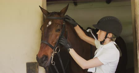 stallion : Side view of a Caucasian woman putting bridle on a bay dressage horse in a stable before horse riding, slow motion Stock Footage