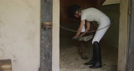 terbiye : Side view of a Caucasian woman wearing a riding hat and riding boots taking care of her Dressage horses feet in a stable, slow motion