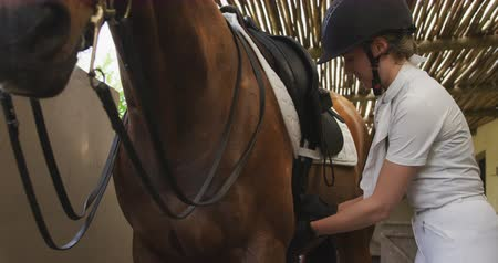 terbiye : Side view of a Caucasian woman preparing the saddle on a dressage horse at a stable before riding, fastening the girth, slow motion Stok Video
