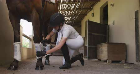 kotník : Side view of a Caucasian woman kneeling and preparing a dressage horse at a stable before riding, fastening the ankle guards, slow motion Dostupné videozáznamy