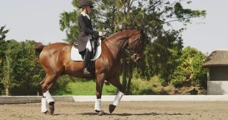 terbiye : Side view of a smartly dressed Caucasian woman riding a bay horse in a paddock during a dressage competition, slow motion Stok Video
