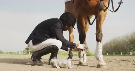 dizgin : Side view of a smartly dressed African American man kneeling and preparing his Dressage horse in a paddock, fastening ankle guards on it before riding, slow motion