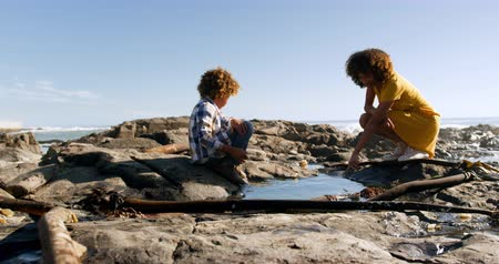 ajoelhado : SIde view of mixed race woman with her son enjoying family time by the seaside together on a sunny day with blue sky, kneeling down, looking at a rock pool and pointing, slow motion Vídeos