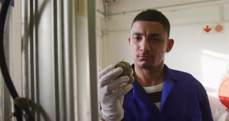 productiviteit : Front view close up of a mixed race man wearing overalls and gloves working at a factory making cricket balls, holding and inspecting the core of a cricket ball, slow motion