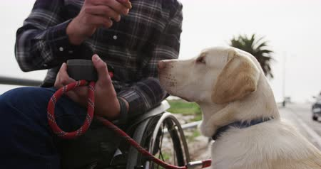 paraplegic : Front view of a Caucasian man in a wheelchair enjoying taking a walk with his dog in the countryside by the sea, giving his dog a treat in slow motion