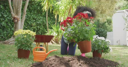 el arabası : Front view of an African American girl having a good time in a garden, kneeling, putting a plant on a ground, on a sunny day, in slow motion