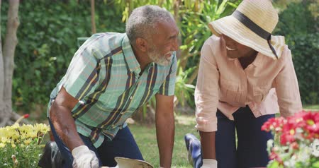 Łopata : Front view close up of an African American woman having a good time in a garden, kneeling, planting flowers with her father, who is digging in the ground with a shovel, laughing, on a sunny day, in slow motion Wideo