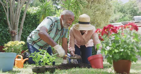 plantio : Front view of an African American woman having a good time in a garden, kneeling, planting flowers with her father, digging in the ground with a shovel, pouring the dirt into a pot, on a sunny day, in slow motion