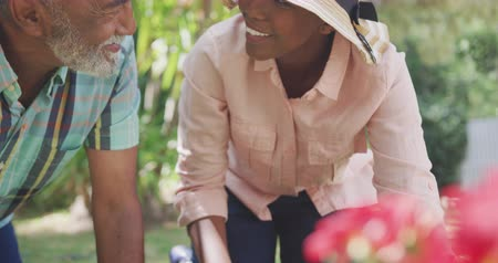 leisure time : Front view close up of an African American woman having a good time in a garden, kneeling, planting flowers with her father, beating dirt in a pot, looking at each other, smiling, on a sunny day, in slow motion