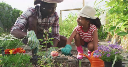 ásta : Front view of an African American man and his mixed race daughter enjoying time at a garden together, kneeling, planting, digging in the ground, in slow motion