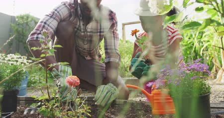 one by one : Front view of an African American man and his mixed race daughter enjoying time at a garden together, kneeling, planting roses, in slow motion