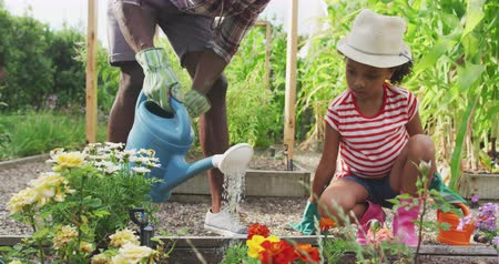 kutuları : Front view of an African American man and his mixed race daughter enjoying time at a garden together, kneeling, planting, a man is watering the plants with a watering can, in slow motion