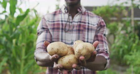batatas : Front view of an African American man enjoying time at a garden, presenting fresh peeled potatoes, in slow motion