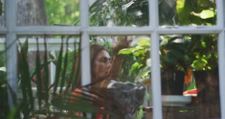 経験 : Side view of a Caucasian woman with long brown hair, inspecting plants in a greenhouse, seen through the greenhouse window, in slow motion