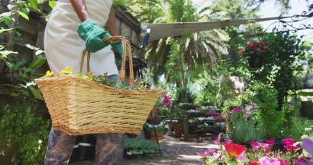 ajoelhado : Side view mid section of a Caucasian woman wearing an apron and gardening gloves kneeling in a sunny garden, picking up a basket with a selection of plants in it and walking away, in slow motion Vídeos