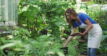 passatempo : Side view of a Caucasian woman with long brown hair wearing an apron, walking in a sunny garden, touching the leaves of plants and using a tablet computer, in slow motion