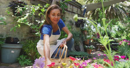 a genoux : Front view of a Caucasian woman wearing an apron kneeling in a sunny garden, looking at plants, selecting a potted plant and putting it in a basket, in slow motion Vidéos Libres De Droits