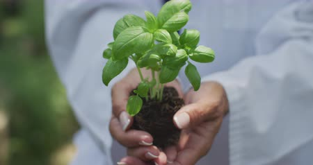 botanikus : Front view mid section of the hands of a Caucasian woman wearing a lab coat, standing in a garden holding a seedling in soil in her cupped hands and presenting it to camera, in slow motion