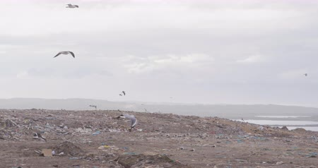 mensen massa : Flock of birds flying over rubbish piled on a landfill full of trash with stormy overcast sky in the background in slow motion
