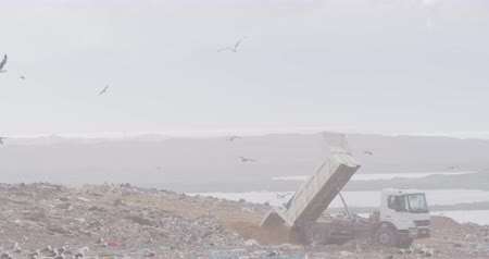environmental awareness : Flock of birds flying over vehicle working and clearing rubbish piled on a landfill full of trash with cloudy overcast sky in the background in slow motion
