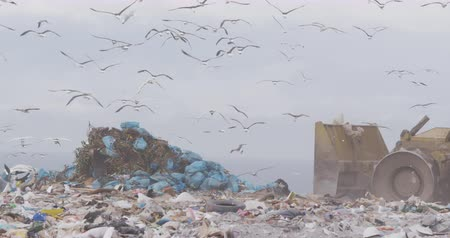 buldozer : Flock of birds flying over vehicle working and clearing rubbish piled on a landfill full of trash with cloudy overcast sky in the background in slow motion