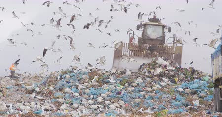 preoccupazione : Flock of birds flying over vehicle working and clearing rubbish piled on a landfill full of trash with cloudy overcast sky in the background in slow motion