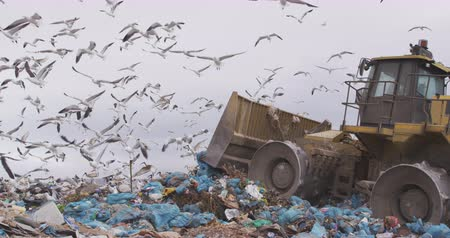 aquecimento global : Flock of birds flying over vehicle working and clearing rubbish piled on a landfill full of trash with cloudy overcast sky in the background in slow motion