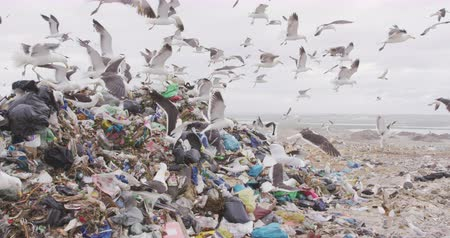 wasteful : Flock of birds flying over rubbish piled on a landfill full of trash with stormy overcast sky in the background in slow motion