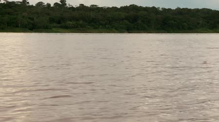 yunus : video footage of dolphins in the amazon river, peru