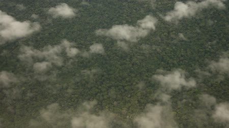 amazonka : Flying Over Rainforest, Southamerica Wideo