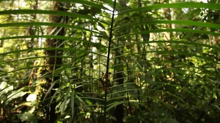 jungle : Rainforest