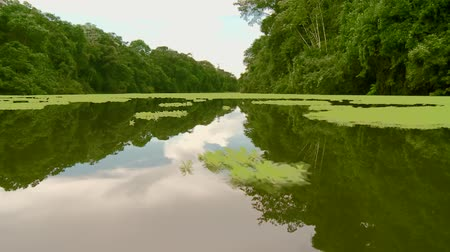 amazonka : Video Footage Of A Boat Trip At the amazon river in southamerica, peru Wideo