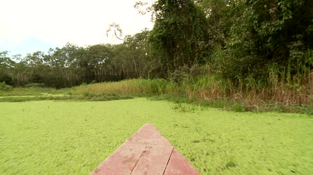 temprature : Video Footage Of A Boat Trip At the amazon river in southamerica, peru Stock Footage