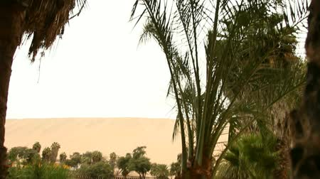 vaha : video footage of a oasis in a sand desert, peru, south america Stok Video
