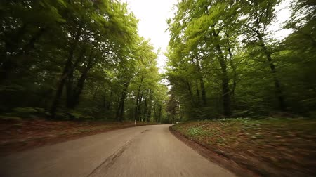 point of view pov : POV video footage of driving in a forest in south tyrol, italy, europe