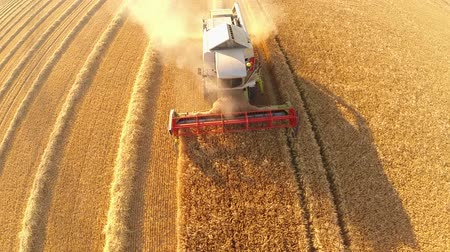 kombájn : aerial video footage of a combine harvester on a grainfield in germany