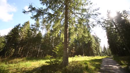 fatörzs : Video Footage of the Black Forest in Germany near Freudenstadt